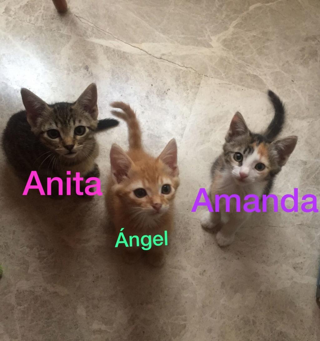 ANGEL - ROUX - EN FA EN SUISSE Anita_14