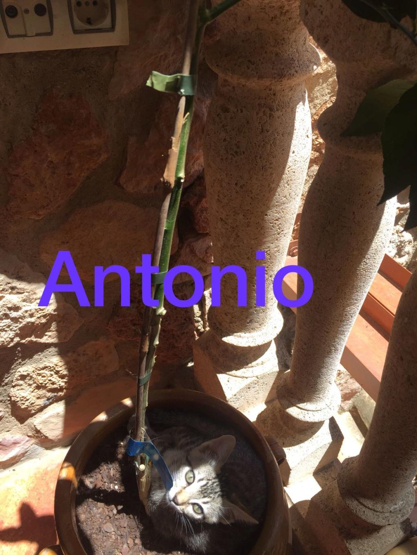 ANTONIO - TIGRE - EN FA EN SUISSE Antoni10