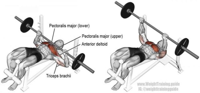 Tổng hợp các bài tập ngực từ cơ bản đến nâng cao trong thể hình Bai-ta14