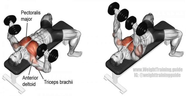 Tổng hợp các bài tập ngực từ cơ bản đến nâng cao trong thể hình Bai-ta15