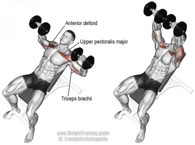Tổng hợp các bài tập ngực từ cơ bản đến nâng cao trong thể hình Bai-ta16