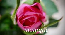 Bonne Fête Monique 48394-10