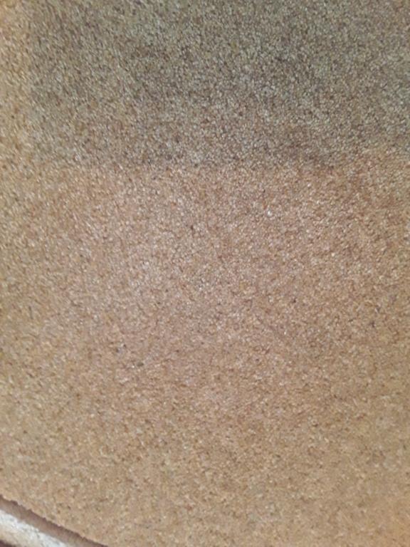 Free new symbol living area carpets 20190516