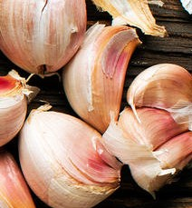 Spices can help improve quality of life Garlic10