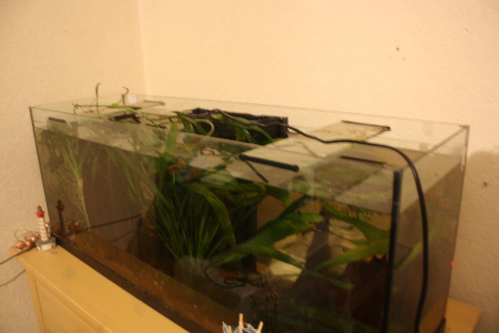 Aquarium amazonien 115 L. Img_4911