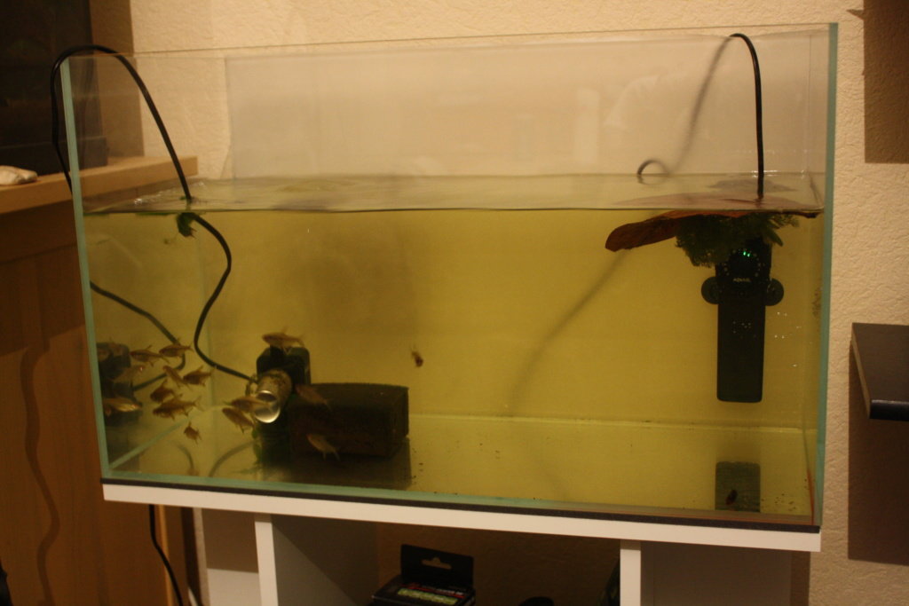 Aquarium amazonien 115 L. Img_4912