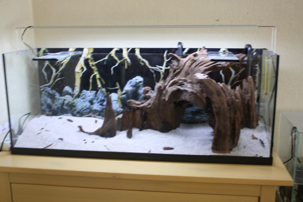 Aquarium amazonien 115 L. - Page 6 Img_5113