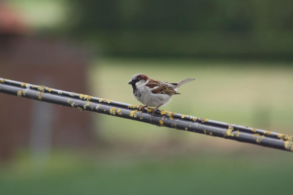photographie d'oiseaux - Page 2 Img_5412