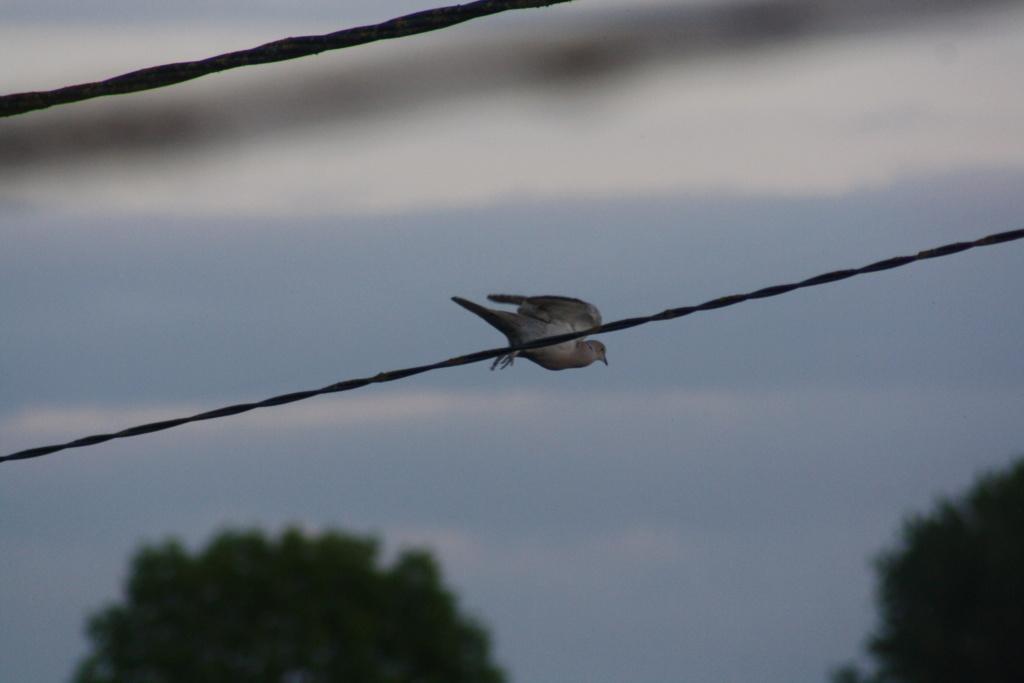photographie d'oiseaux - Page 2 Img_5413
