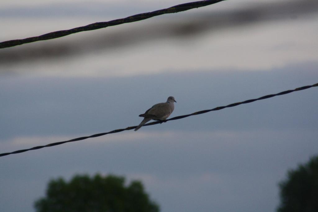 photographie d'oiseaux - Page 2 Img_5414