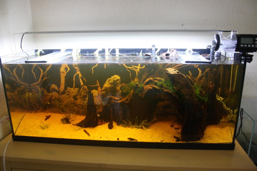 Aquarium amazonien 115 L. - Page 8 Img_5512