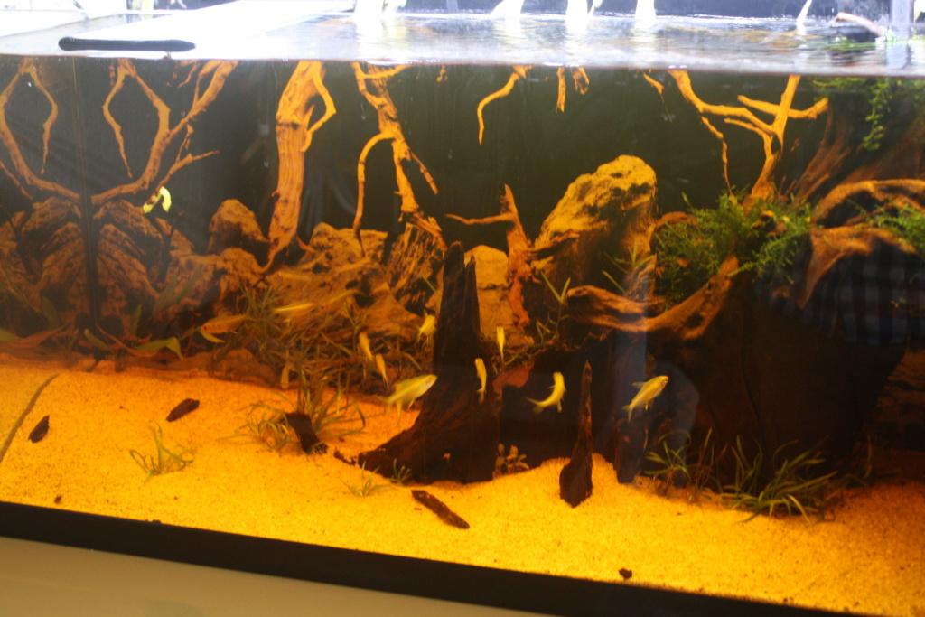 Aquarium amazonien 115 L. - Page 10 Img_5615