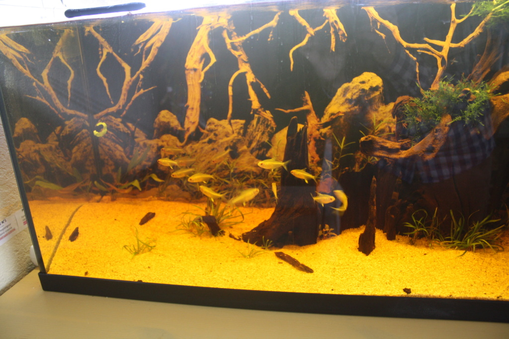 Aquarium amazonien 115 L. - Page 10 Img_5616