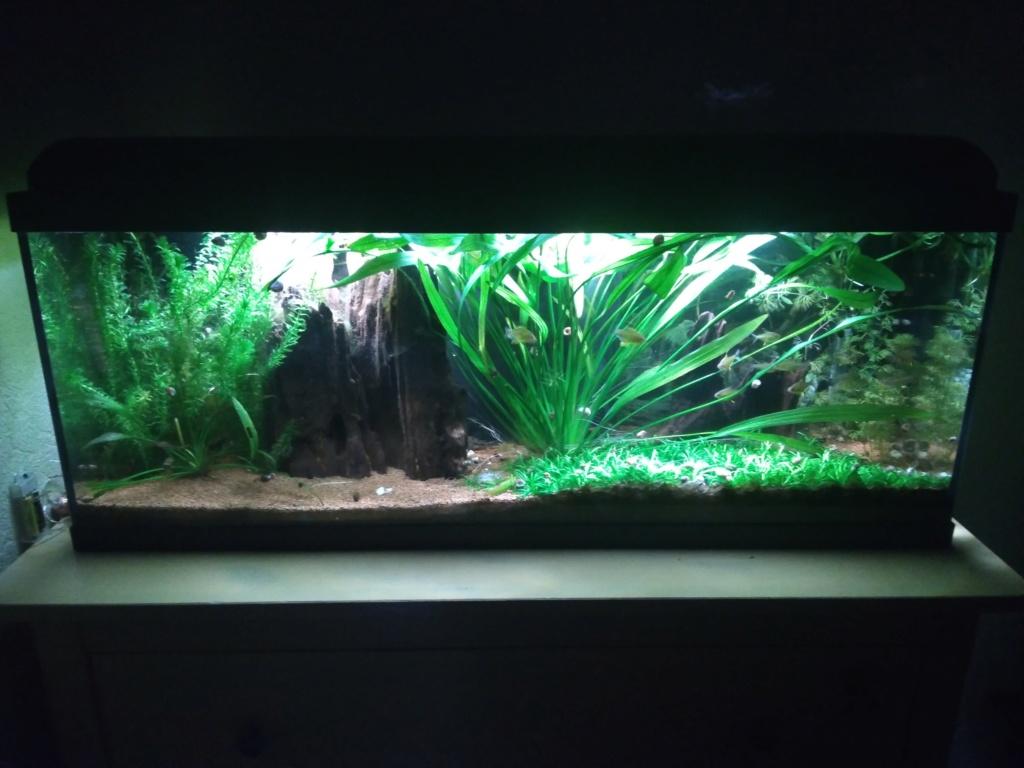 Aquarium amazonien 115 L. P_201910