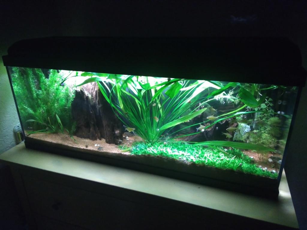 Aquarium amazonien 115 L. P_201911