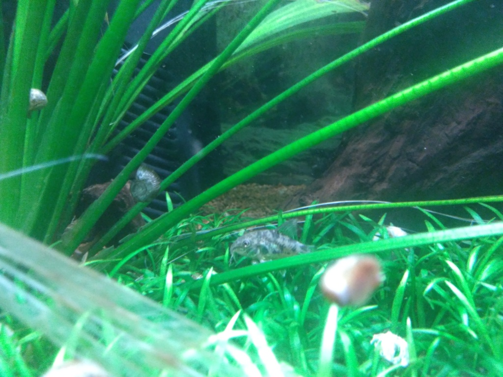 Aquarium amazonien 115 L. P_201914