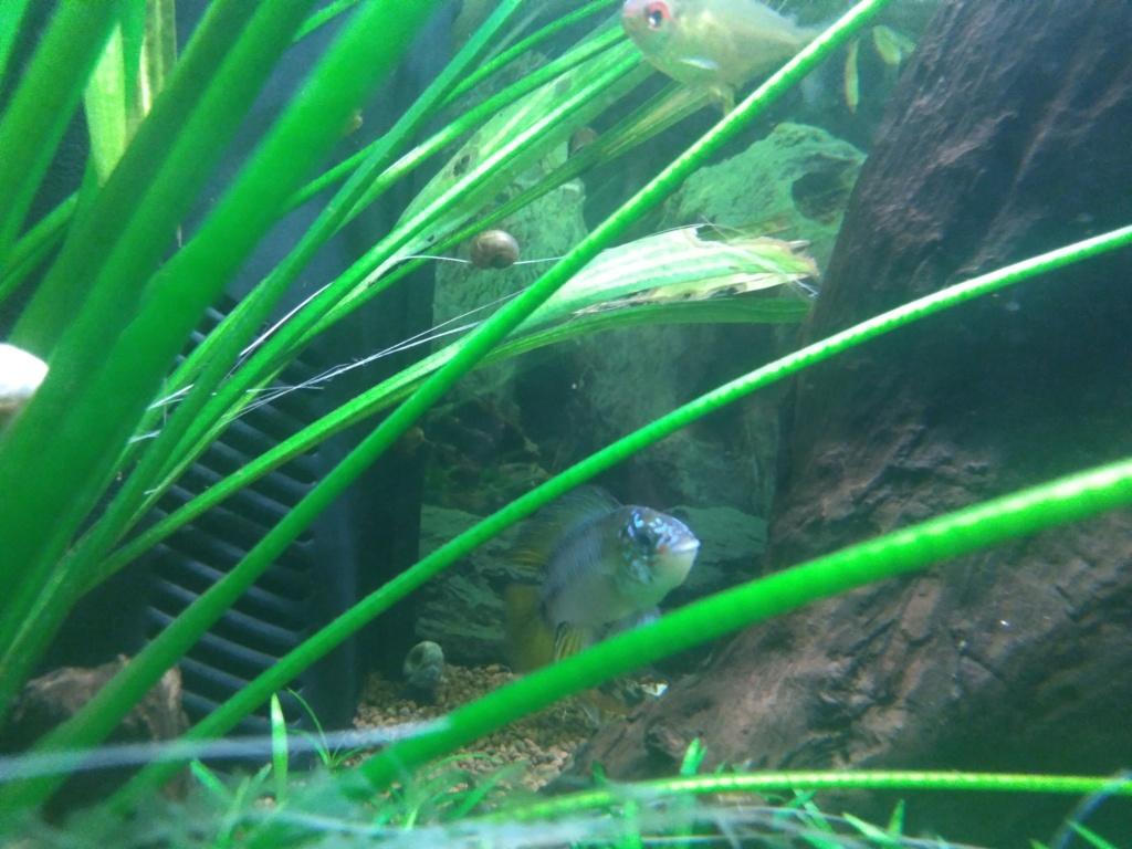 Aquarium amazonien 115 L. P_201919