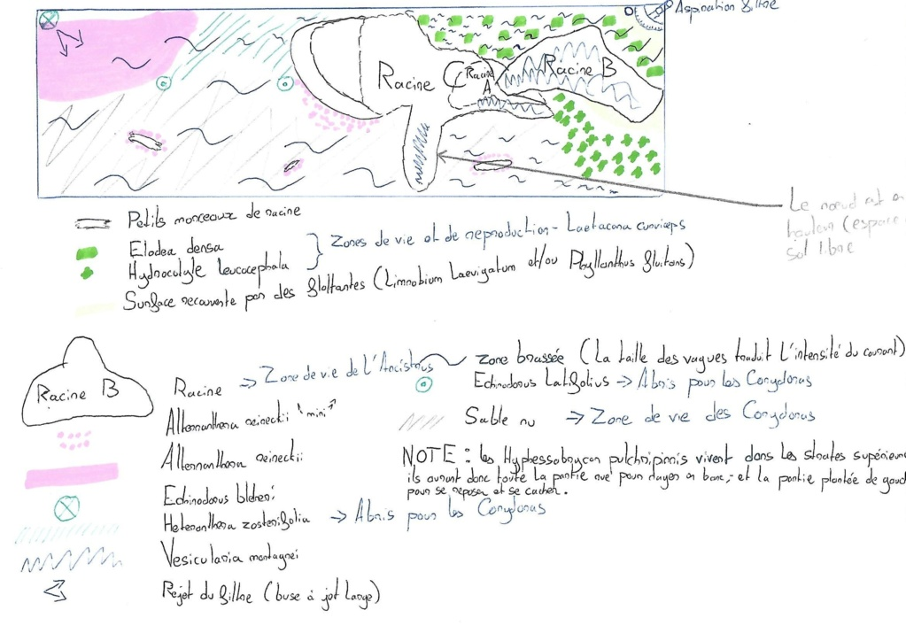 Aquarium amazonien 115 L. - Page 5 Scan_010