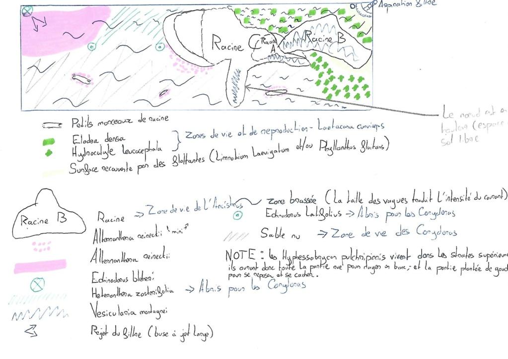 Aquarium amazonien 115 L. - Page 6 Scan_011