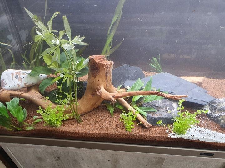 Mon Aquarium de 230l net 74442911