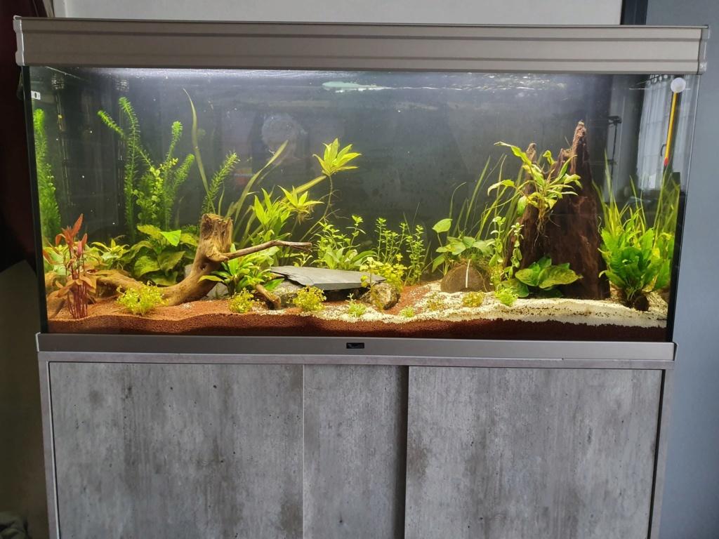 Mon Aquarium de 230l net Aquari12