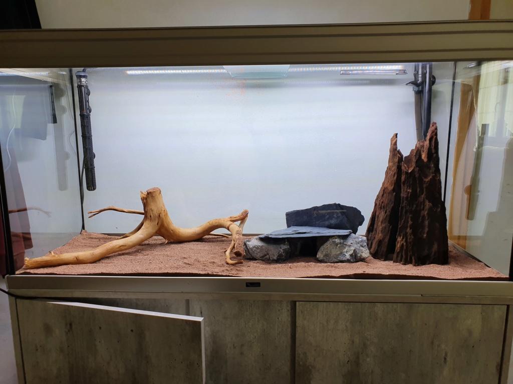 Mon Aquarium de 230l net Mon_aq13