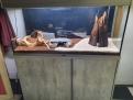 Problème dans mon aquarium 80 litres Mon_aq28