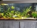 Problème dans mon aquarium 80 litres Mon_aq35
