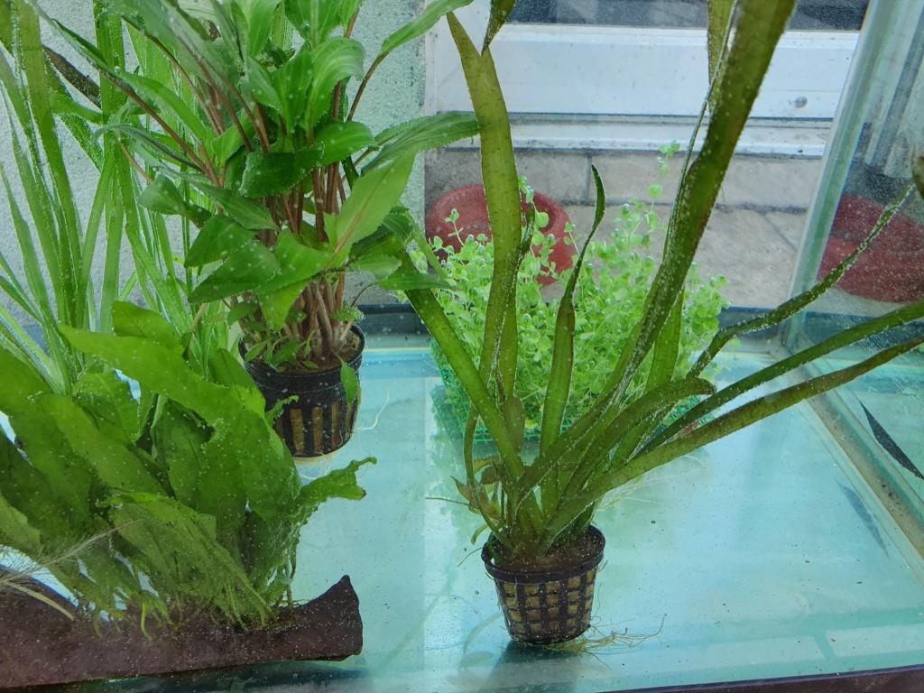 Mon Projet Plante12