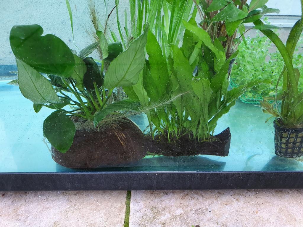 Mon Aquarium de 230l net Plante14