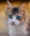 Mein kleiner Anfänger Shop - Seite 2 Cat-3310
