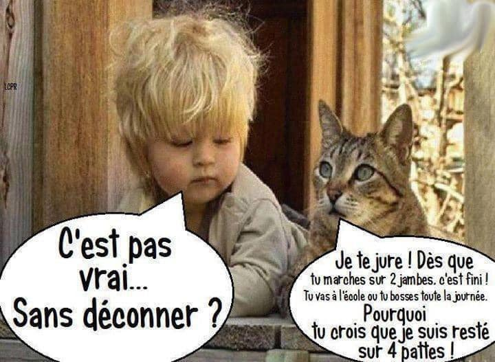 humour - Page 2 17477910
