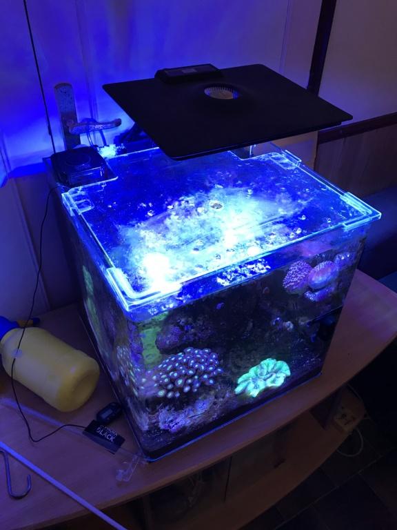 Sauvetage Aquarium Img_0010