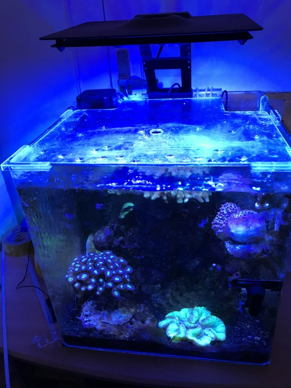 Sauvetage Aquarium Img_0011