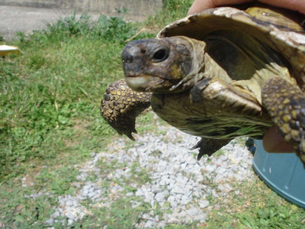 Besoin d'aide pour identification tortue Dsc02310