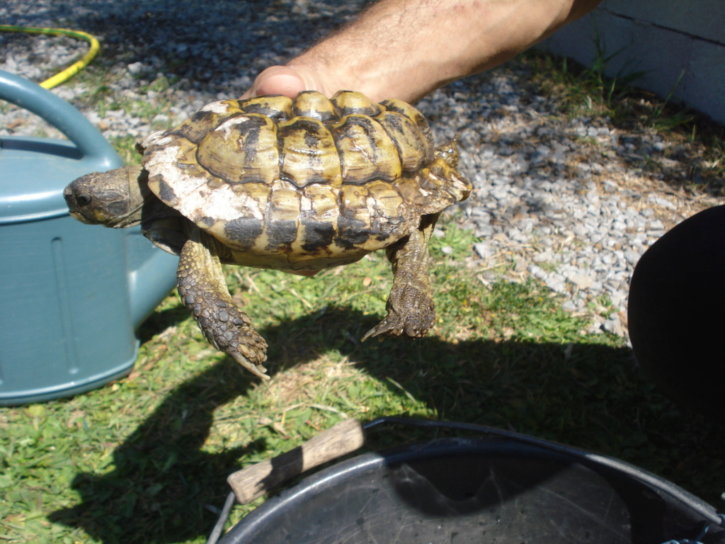 Besoin d'aide pour identification tortue Dsc02311