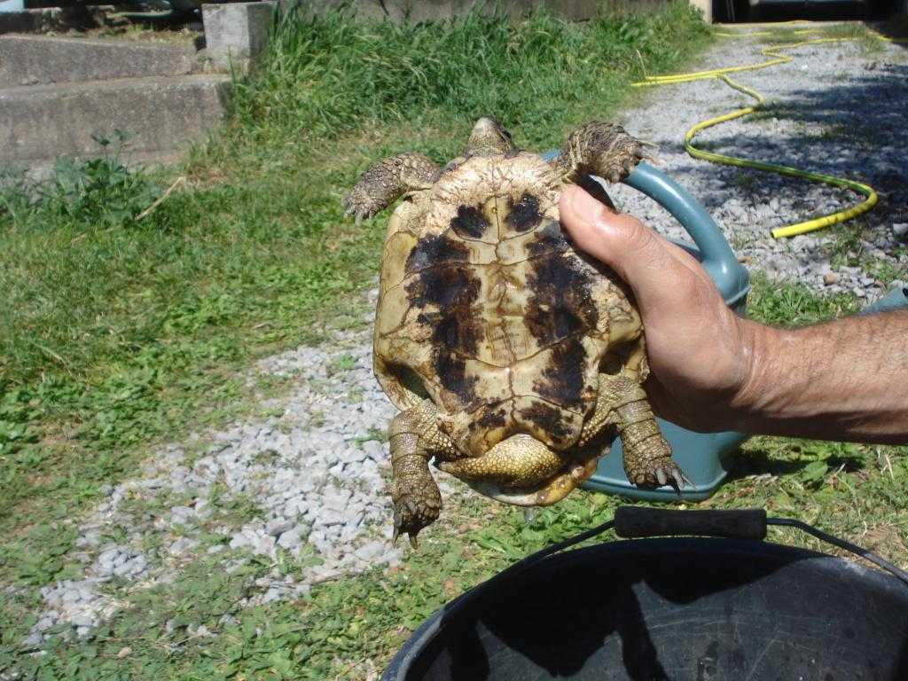 Besoin d'aide pour identification tortue Dsc02312