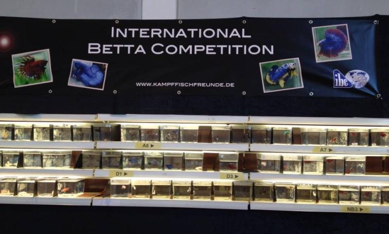 2me Congrès IBC européen + 11me KFF Betta Show, Friedrichshafen 2015 10646710