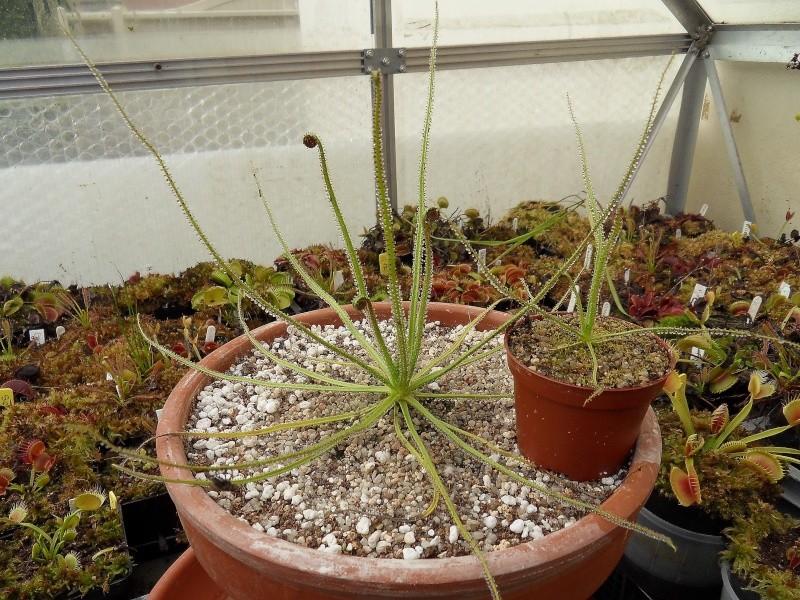 Photo de plantes diverses Sdc13432