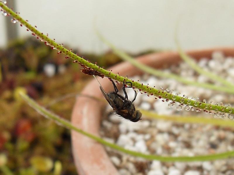 Photo de plantes diverses Sdc13512