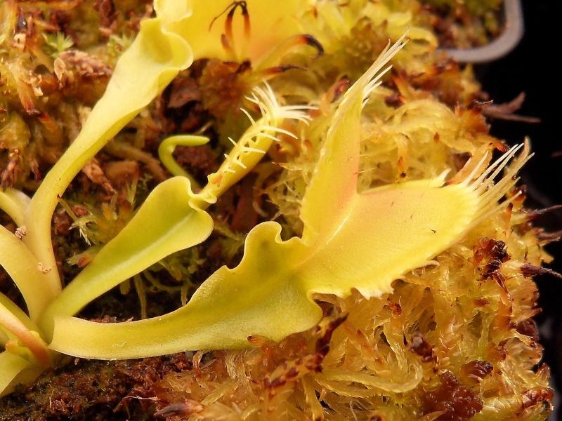 Photo de plantes diverses Sdc13514