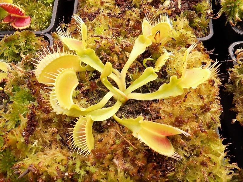 Photo de plantes diverses Sdc13517