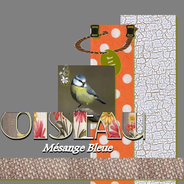 Dictée de Scrap digital  - Page 2 Oiseau12