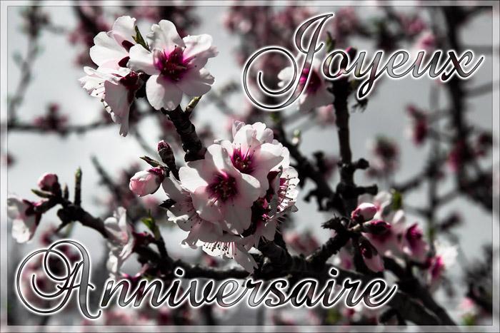 Joyeux anniversaire Ajonc  Fleur-10