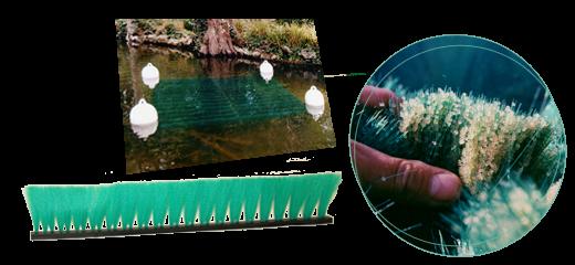 Mise en place des Frayères artificielles sur nos eaux closes Frayer10