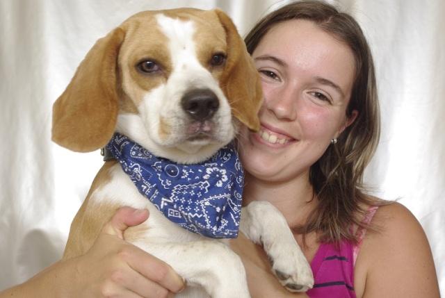 Marley, beagle mâle, 1 an (SPA d'Hermeray - 78) Marley11