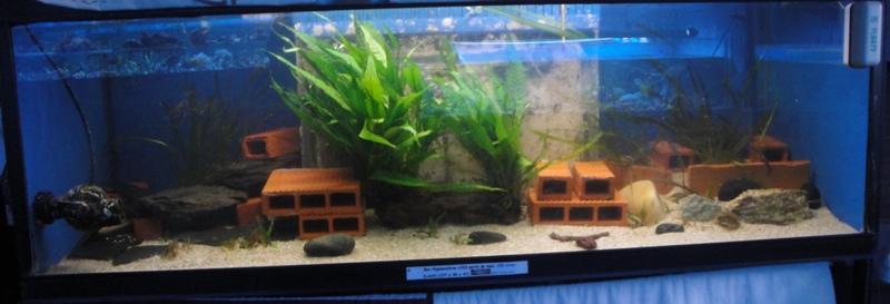 Photos de nos petits bacs d'eau douce Dsc03215