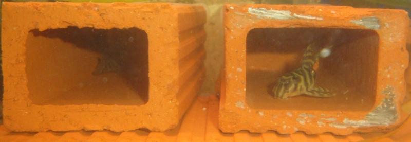 Photos de nos petits bacs d'eau douce Dsc03216