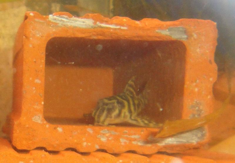 Photos de nos petits bacs d'eau douce Dsc03218