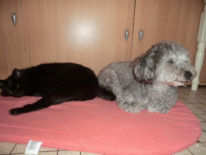 MIKO  jolie chatte noire 4 fractures du bassin a l'adoption - Page 2 Cimg9413